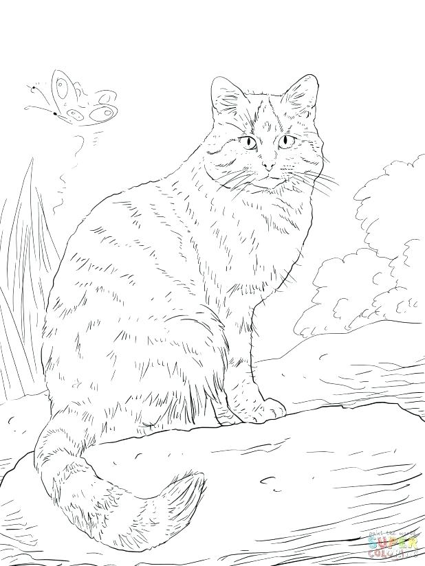 618x824 Wildcat Coloring Page Wildcat Coloring Page Adult Wild Cat