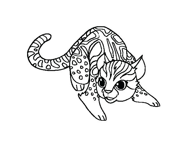 600x470 Wildcat Coloring Page Wildcat Coloring Page Kentucky Wildcat