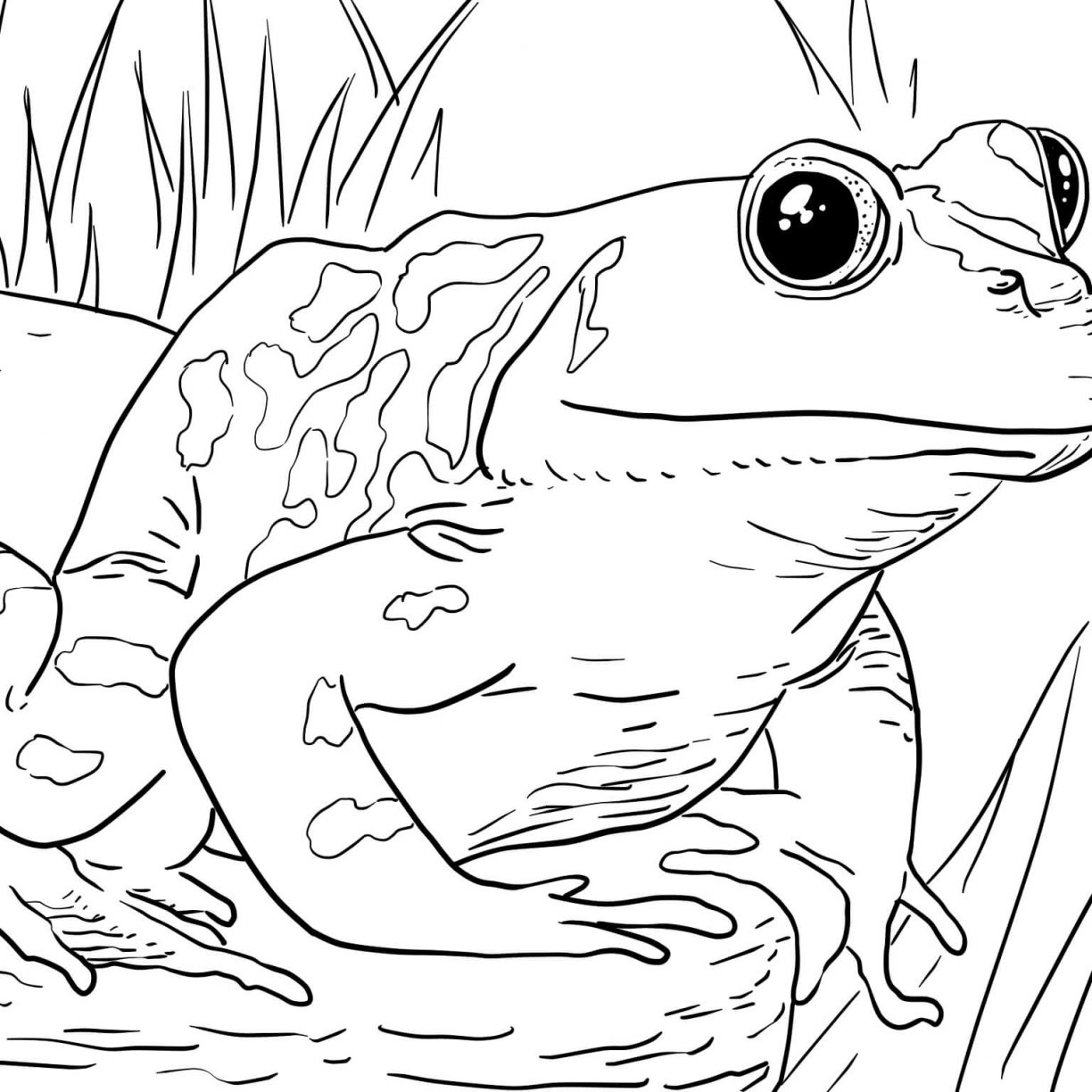 1224x1224 Kermit The Frog Coloring Pages Head Realistic And Page Cartoons