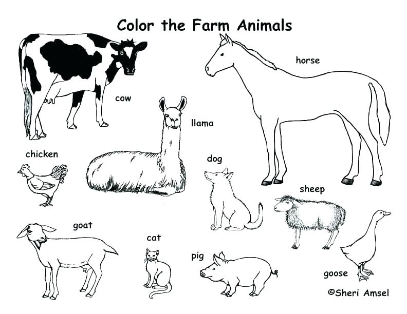 792x612 Animal Coloring Pages Free Farm Animal Colouring Pages Free Kids
