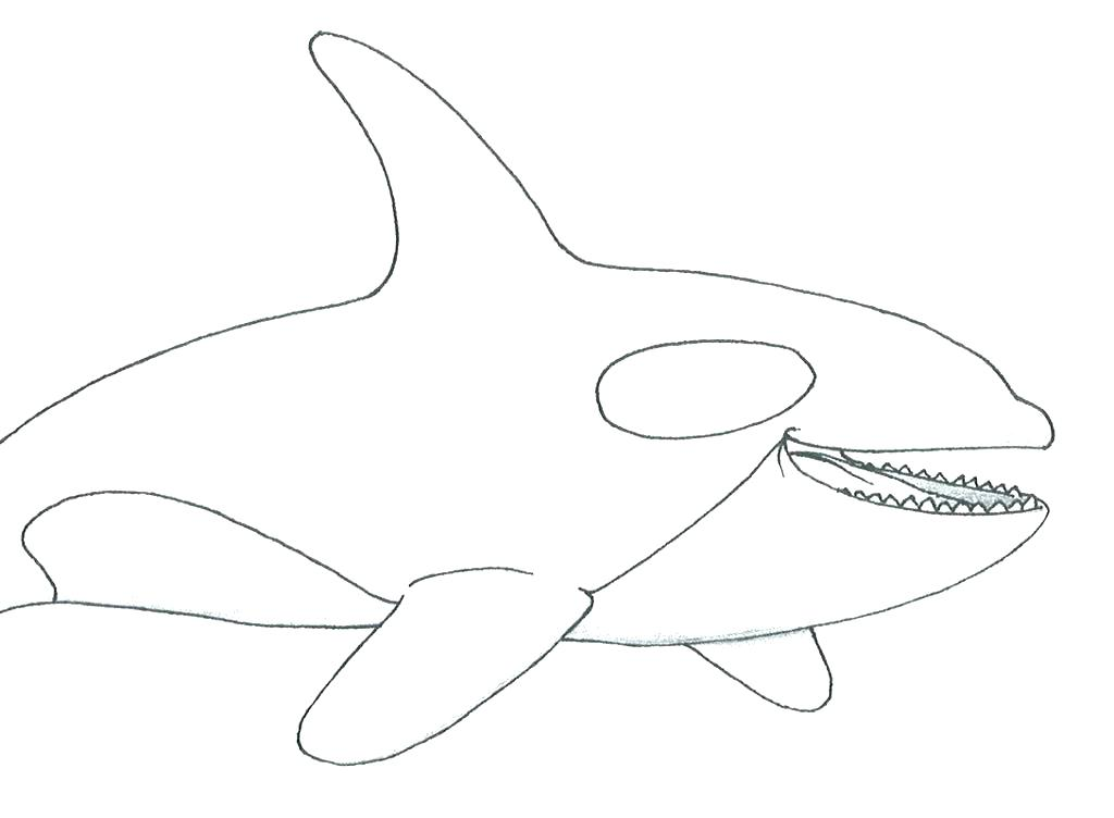 1024x752 Orca Whale Coloring Pages Whale Coloring Pages Printable Whale