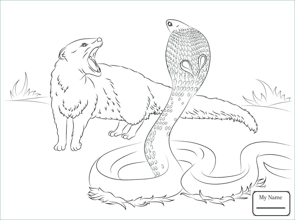1024x763 King Cobra Coloring Pages Home Improvement Stores Sacramento