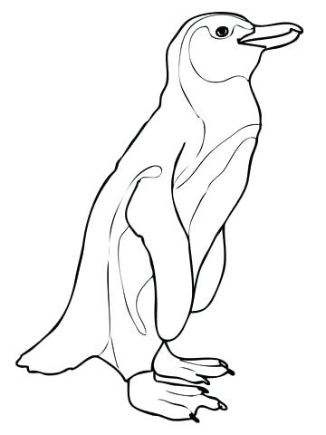 360x480 Penguin Coloring Book Penguin Coloring Page Penguin Coloring Book