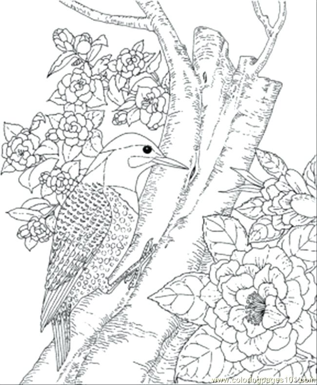 650x789 Bird Coloring Pages Common Kingfisher Cute Bird Coloring Page