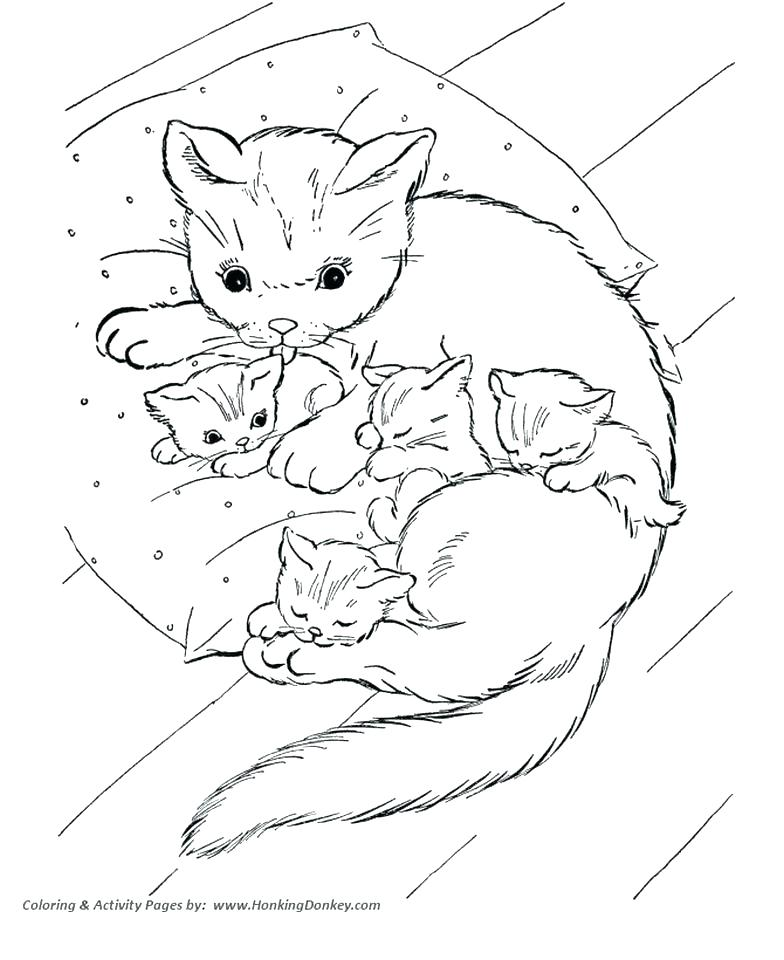 784x960 Kitten Color Pages Kitten Coloring Pages Kitten Coloring Pages