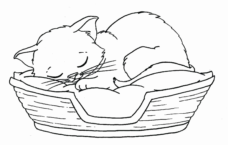 878x559 Kittens Coloring Pages To Print Fresh Cute Kitten Coloring Pages
