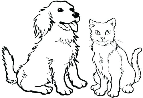 500x344 Coloring Page Kitten