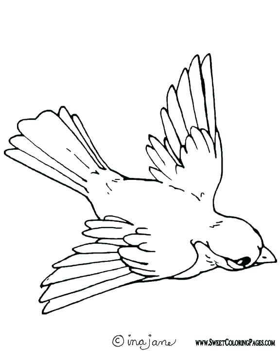 576x720 Kiwi Bird Coloring Page Free Printable Bird Coloring Pages Also
