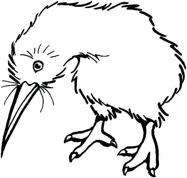 600x573 Kiwi Bird Coloring Page Kiwi Bird Coloring Page Kiwi Bird Look Sad