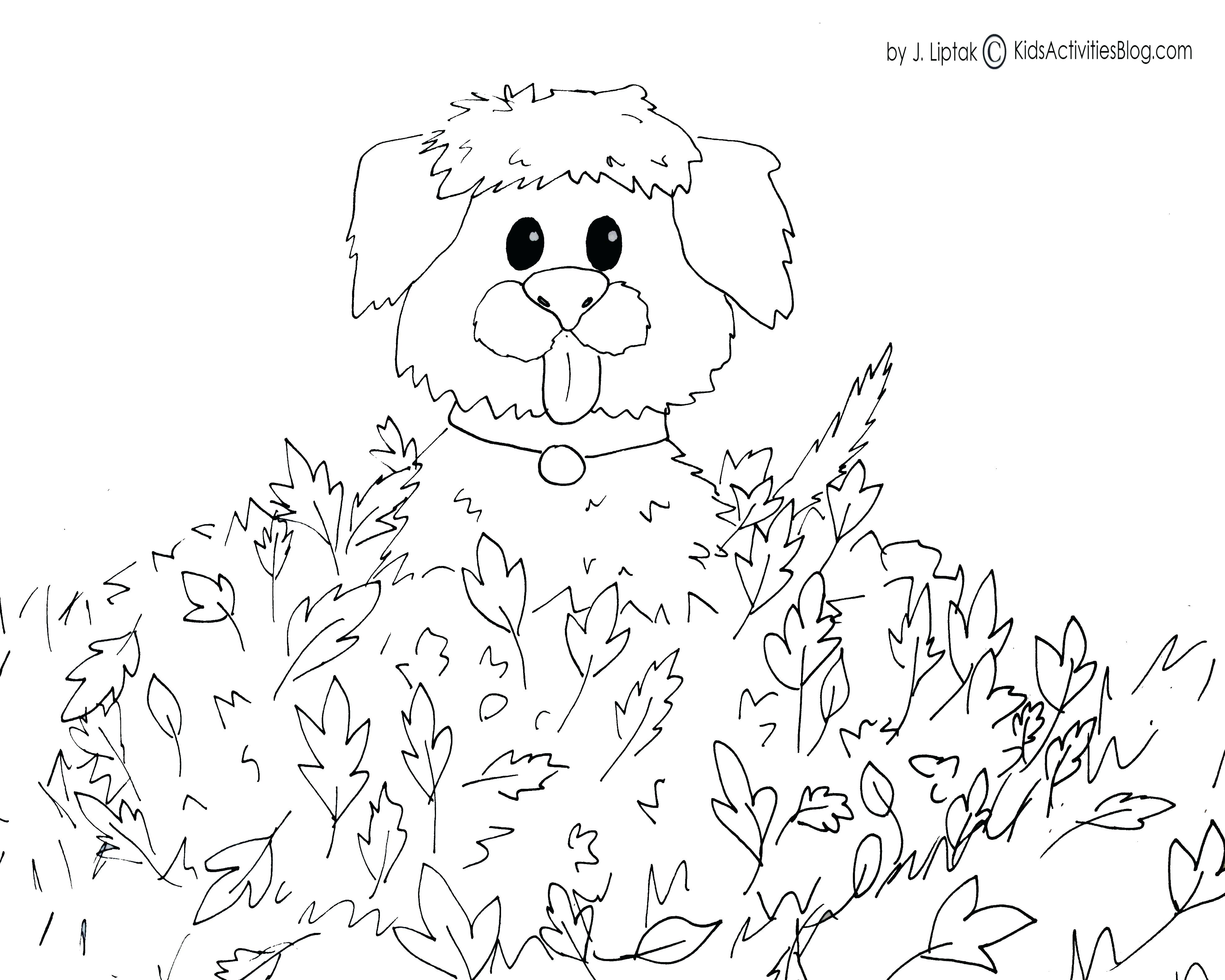 3953x3162 Kiwi Bird Colouring Pictures Best Fall Printable Coloring Pages K