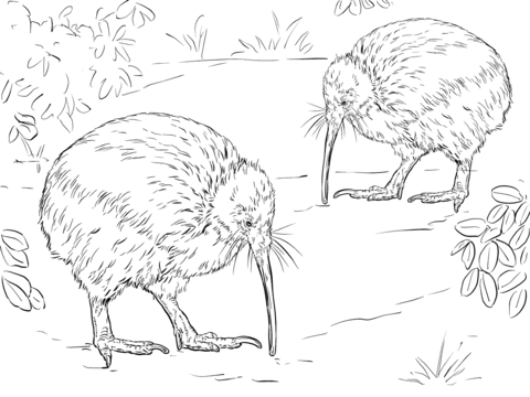 480x360 North Island Brown Kiwi Coloring Page Coloring Pages