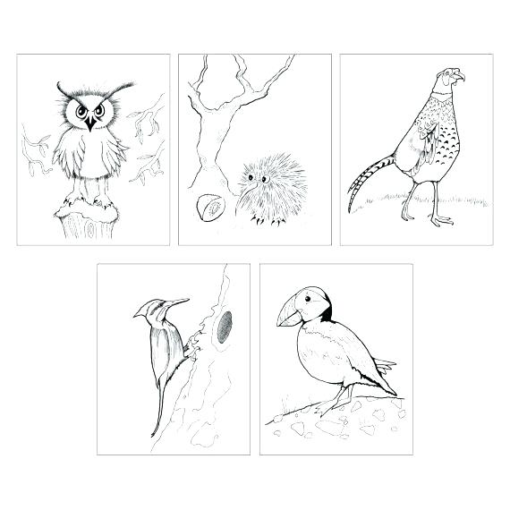 570x570 Puffin Coloring Page Kiwi Bird Coloring Page Bird Coloring Page