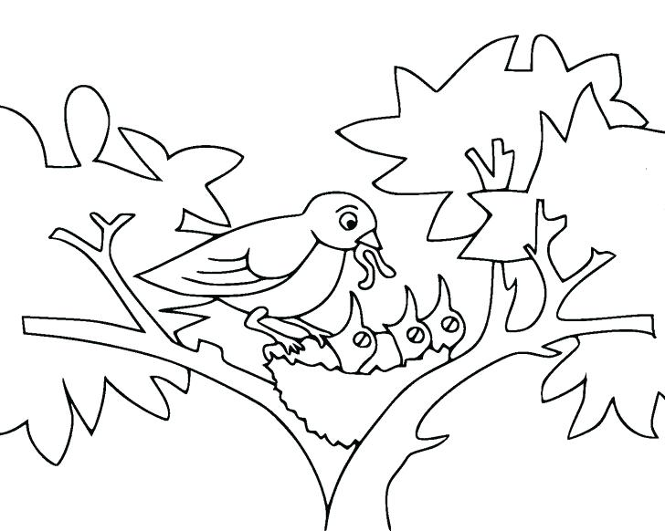 728x582 Drawing Kiwi Bird Coloring Pages