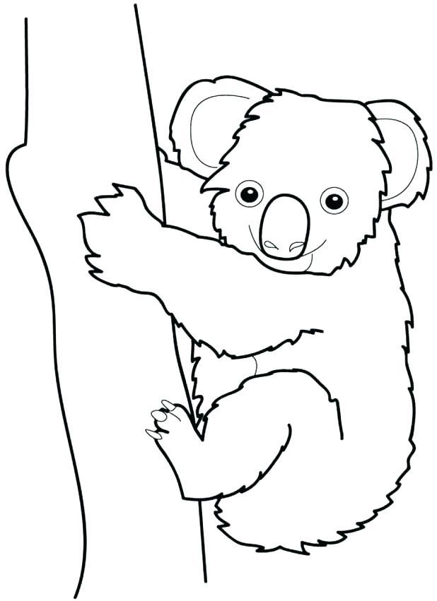 618x851 Koala Bear Coloring Page Koala Bear Pictures To Color Bear Face