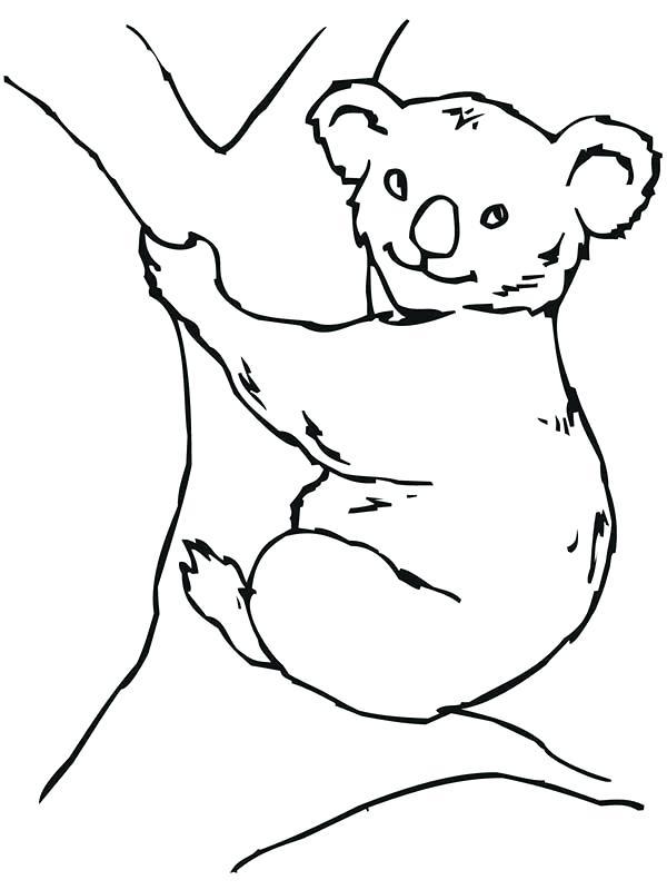 600x800 Koala Bear Coloring Pages Koala Bear On Big Tree Coloring Page