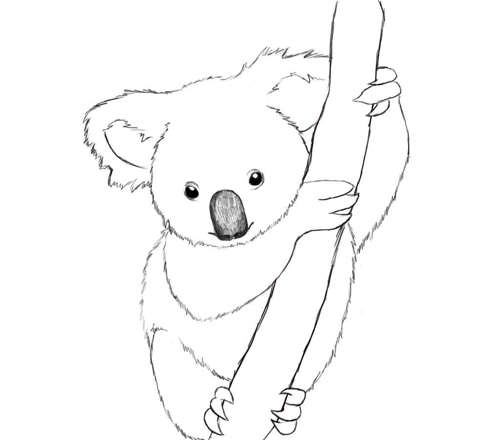 981x900 Koala Bear Coloring Page Collections Free Coloring Pages