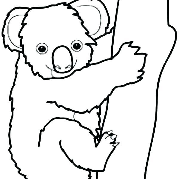 600x600 Koala Coloring Pages Koala Bear Coloring Pages Koala Coloring