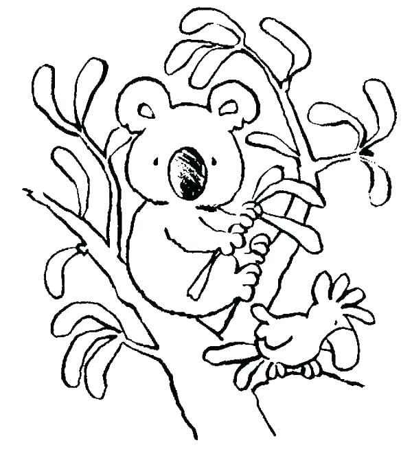 600x664 Koala Coloring Sheet Koala Coloring Page Koala Bear Coloring Pages
