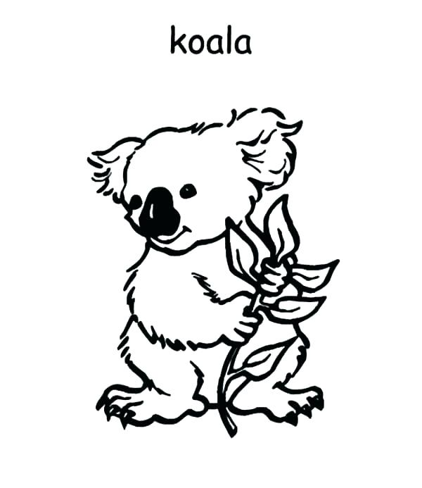 The Best Free Koala Coloring Page Images Download From 202 Free