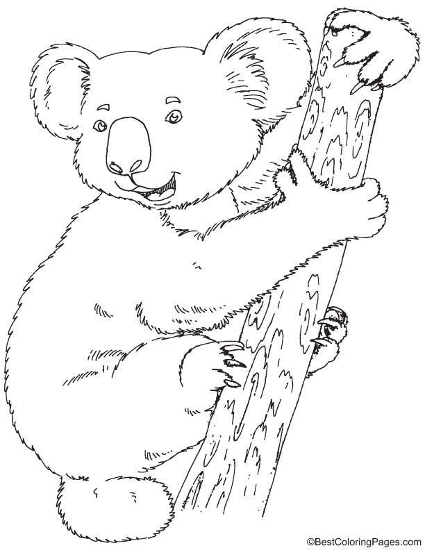 612x792 Koala Coloring Page Australia Theme Xmas Cards