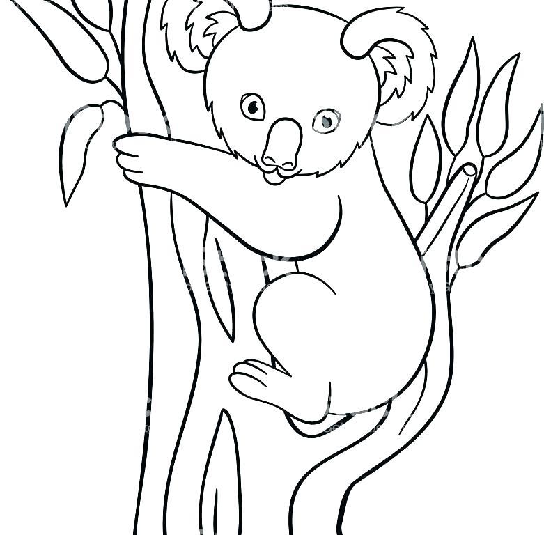 781x768 Realistic Koala Bear Coloring Pages Innovative Koala Bear Coloring