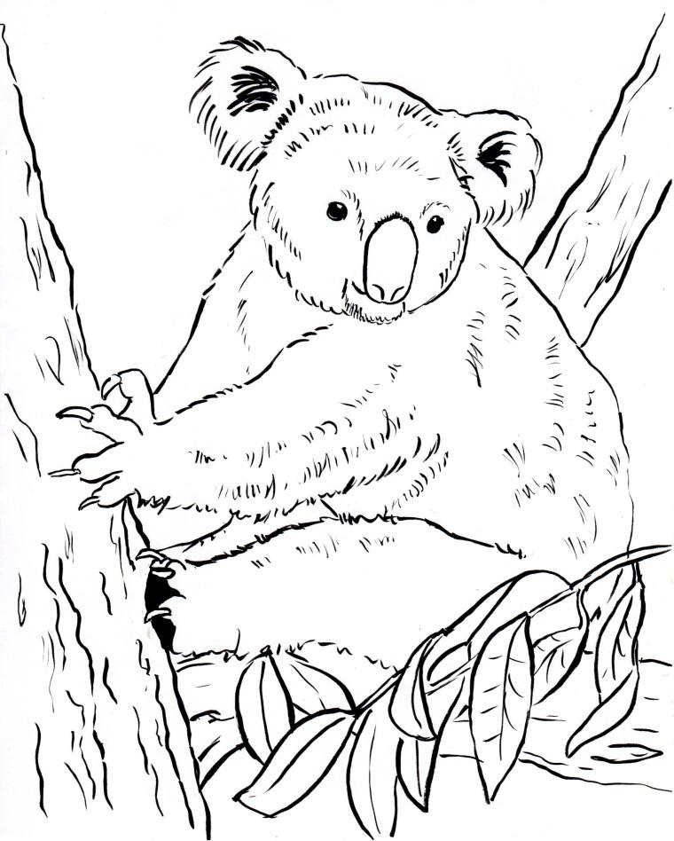 760x948 Koala Bear Coloring Page