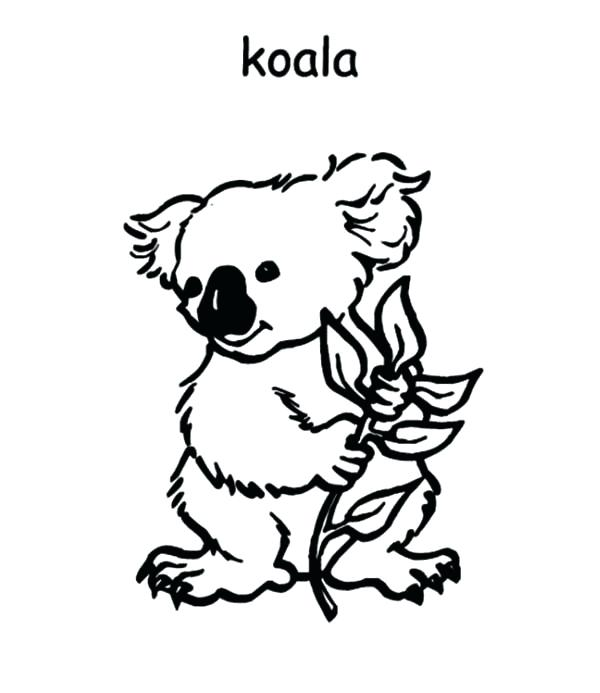 600x693 Koala Coloring Pages Koala Coloring Pages Koala Coloring Pages