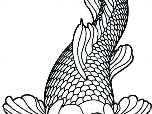 640x480 Koi Fish Coloring Pages Fish Coloring Pages Sketch Realistic Koi