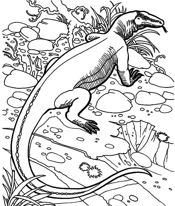 600x703 Komodo Dragon, Komodo Dragon Hiding Behind Grass Coloring Pages