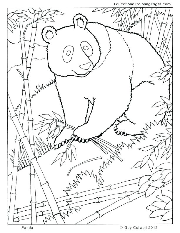 612x792 Kung Fu Panda Coloring Pages Icontent
