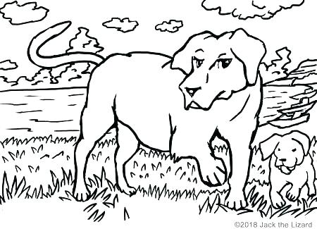 450x325 Black Labrador Colouring Pages Lab Coloring Free Printable