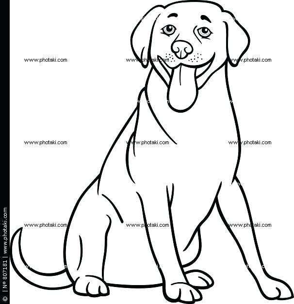 606x626 Black Lab Coloring Pages Coloring Page Dog Lab Black Labrador