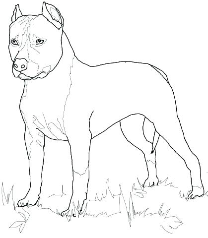 419x480 Black Lab Coloring Pages Coloring Pages Retriever Coloring Pages