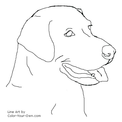 Lab Dog Coloring Pages At Getdrawings Free Download