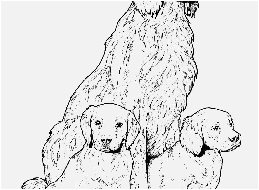 827x609 Top Rated Shoot Dog Coloring Sheets Wonderful