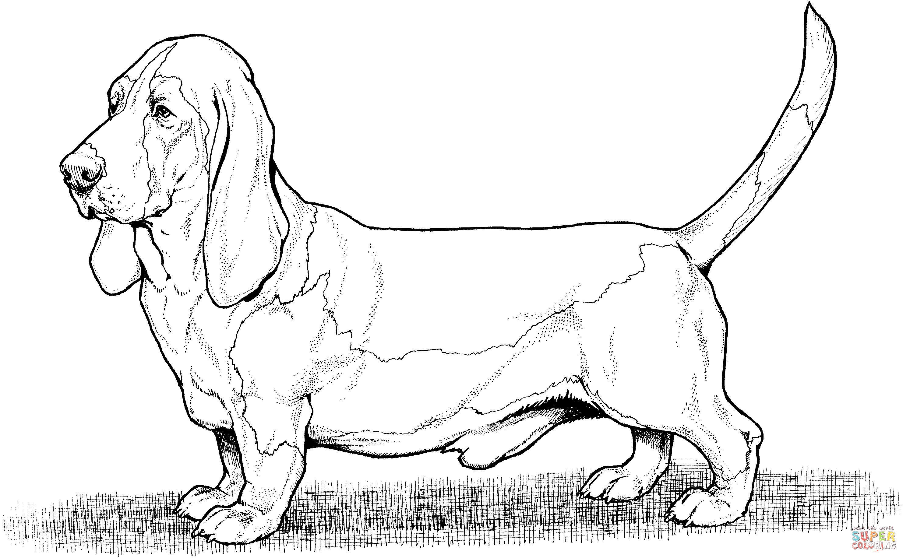 Lab Dogs Coloring Pages