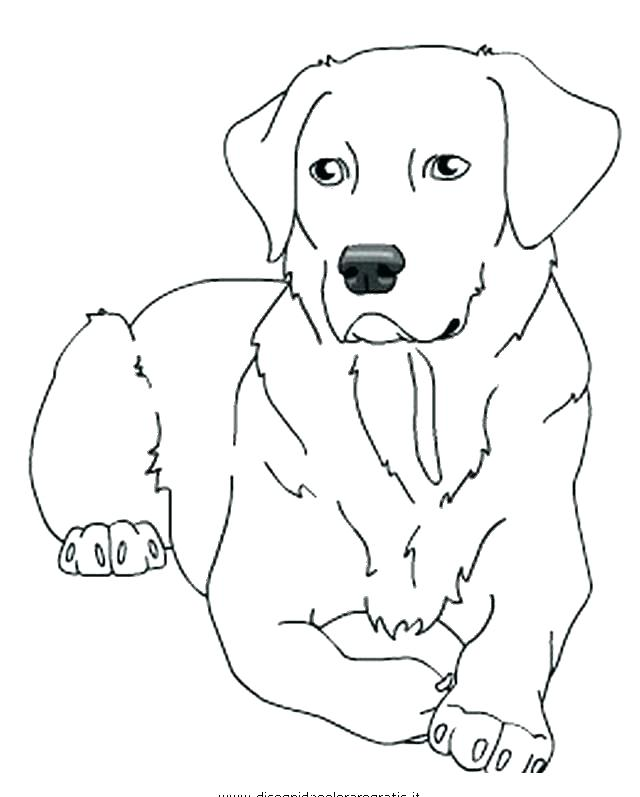 640x797 Labrador Retriever Coloring Pages Retriever Coloring Pages