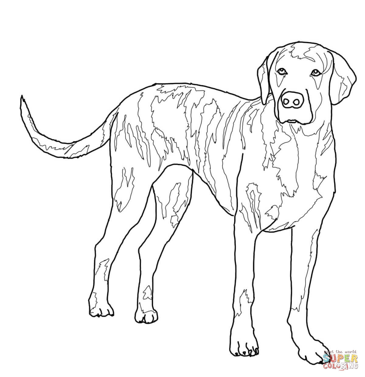 1200x1240 New Realistic Lab Dog Coloring Pages Gallery Free Coloring Pages