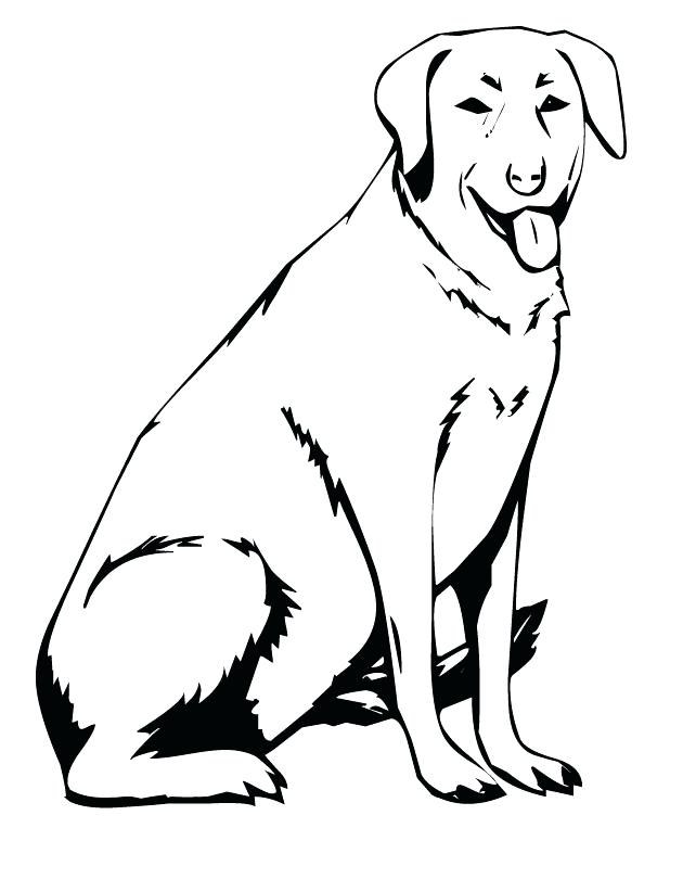 630x810 Coloring Labrador Retriever Coloring Pages Realistic Lab Dog