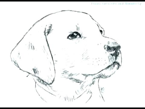 480x360 Real Dog Coloring Pages