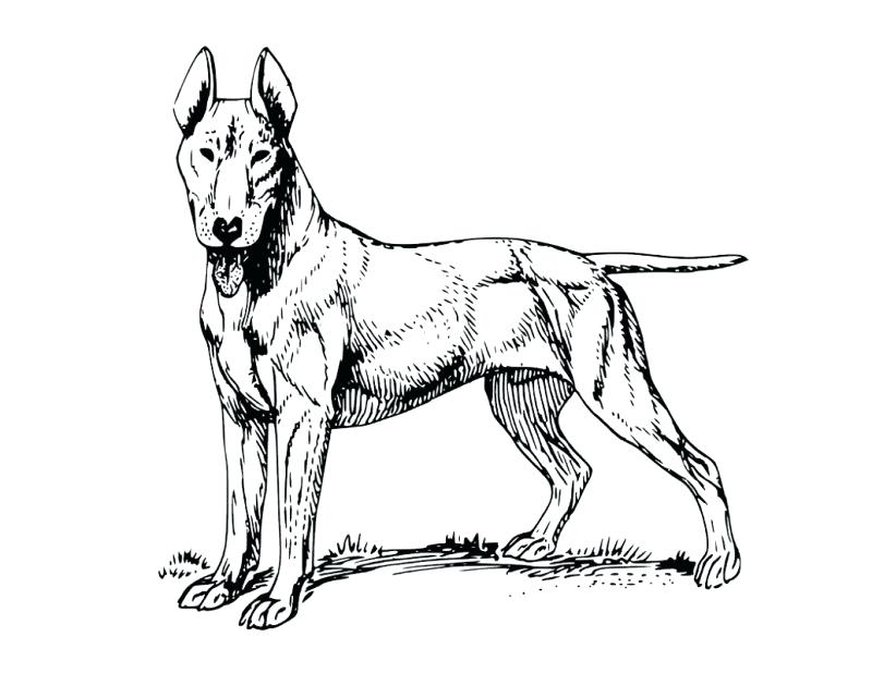 800x618 Realistic Dog Coloring Pages