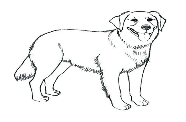 Lab Puppy Coloring Pages At Getdrawings Com Free For Personal Use