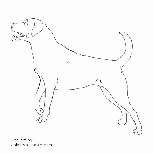 500x500 Lab Coloring Pages Photos Dog Labrador Retriever Coloring Page