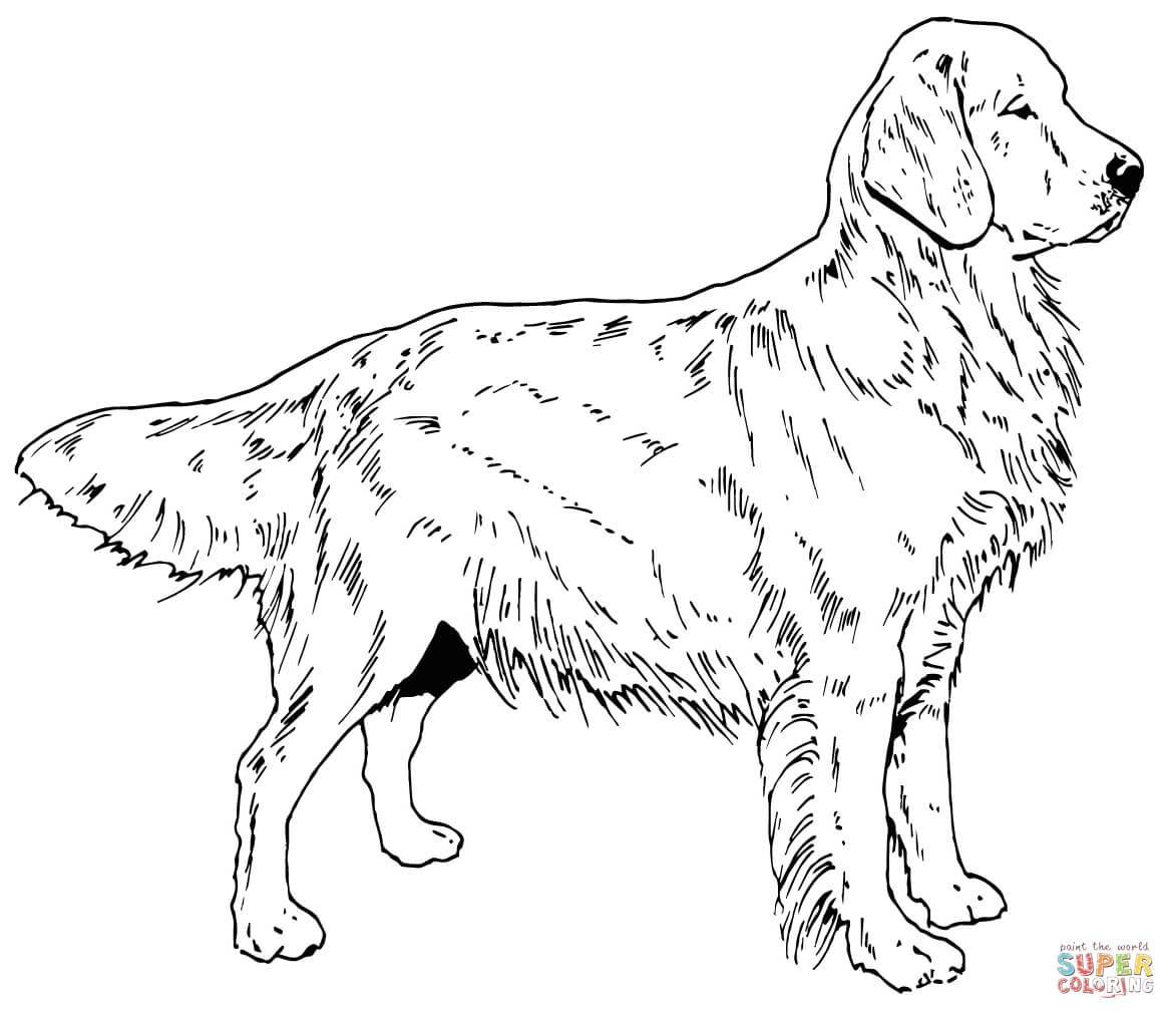 Labrador Dog Coloring Pages