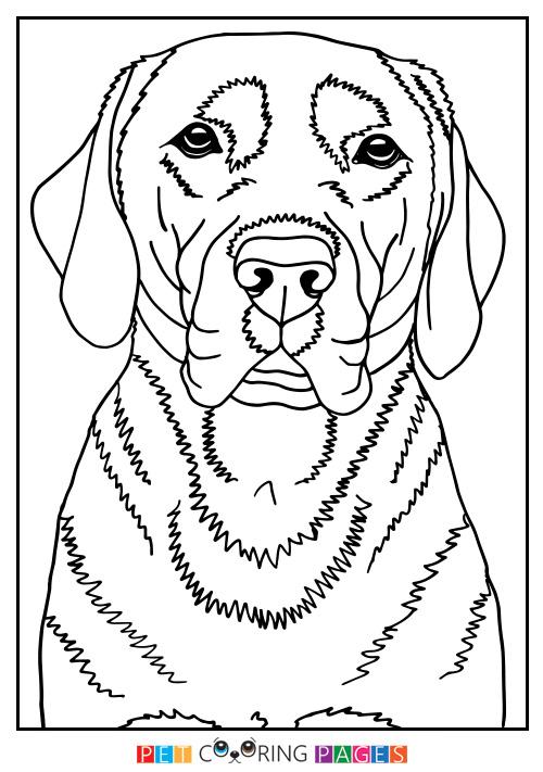 500x711 Labrador Retriever Coloring Page Finja