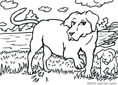 450x325 Labrador Retriever Coloring Pages Coloring Pages Of Retrievers