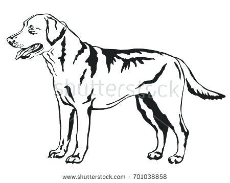 450x358 Labrador Retriever Coloring Pages Retriever Coloring Page Labrador
