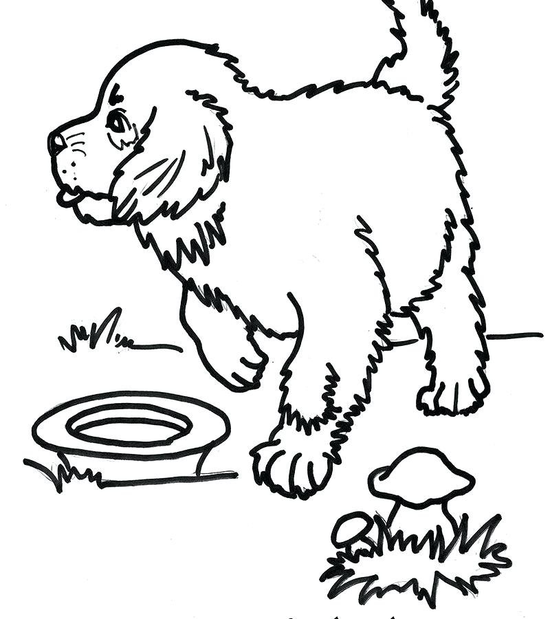 800x900 Coloring Labrador Retriever Coloring Pages Illustration Of Large