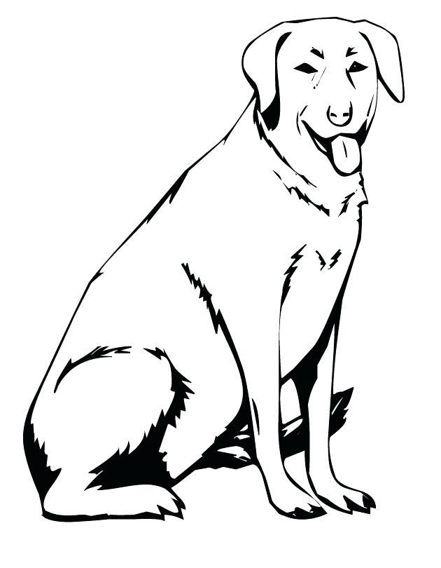 630x810 Coloring Labrador Retriever Coloring Pages Realistic Lab Dog