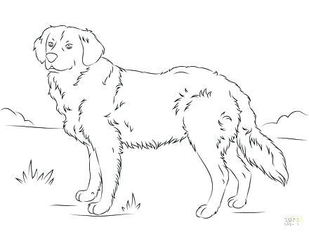 440x330 Labrador Retriever Coloring Pages